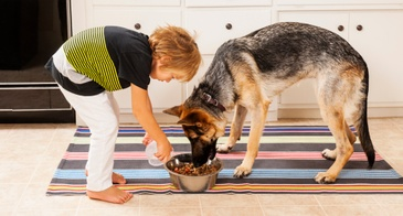 boy feeding german shepard dog in kitchen